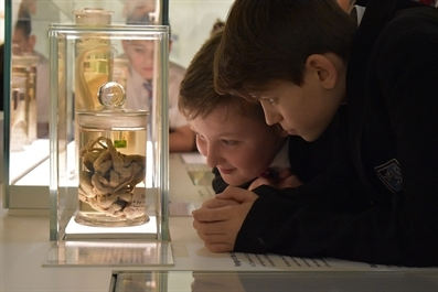 Schools Sessions at the University of Cambridge Museums
