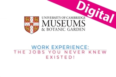 University of Cambridge Museums: virtual work experience